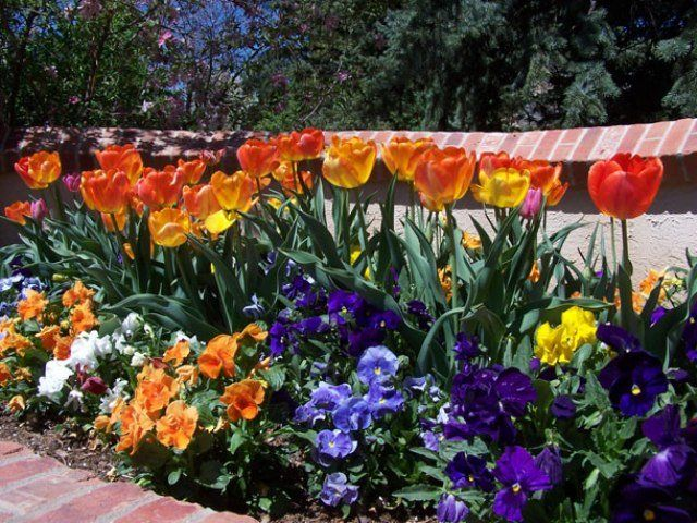 Low maintenance flower bed plants how to design a low for Low maintenance plants for small gardens
