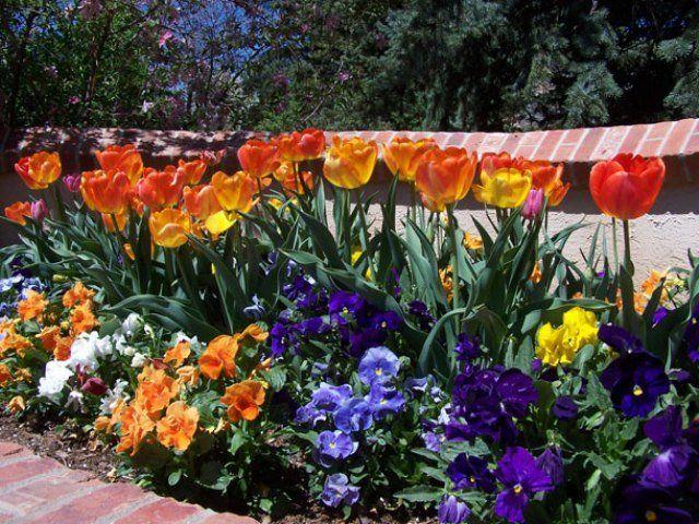 Low Maintenance Flower Bed Plants How To Design A Garden Landscape