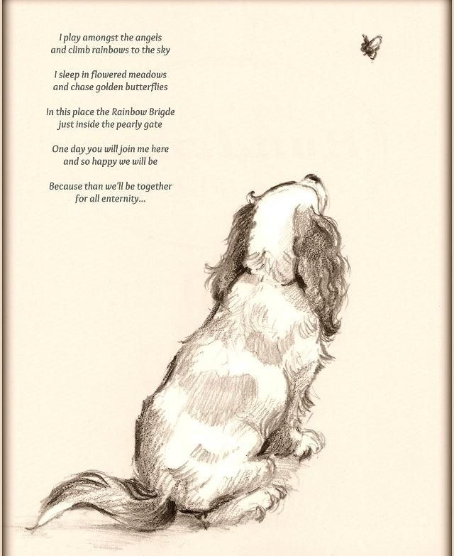 Dog Death Quotes: I Play Amongst The Angels And Climb Rainbows To The Sky