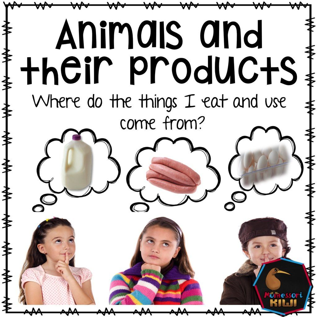 Animals And Their Products Food Products And Uses