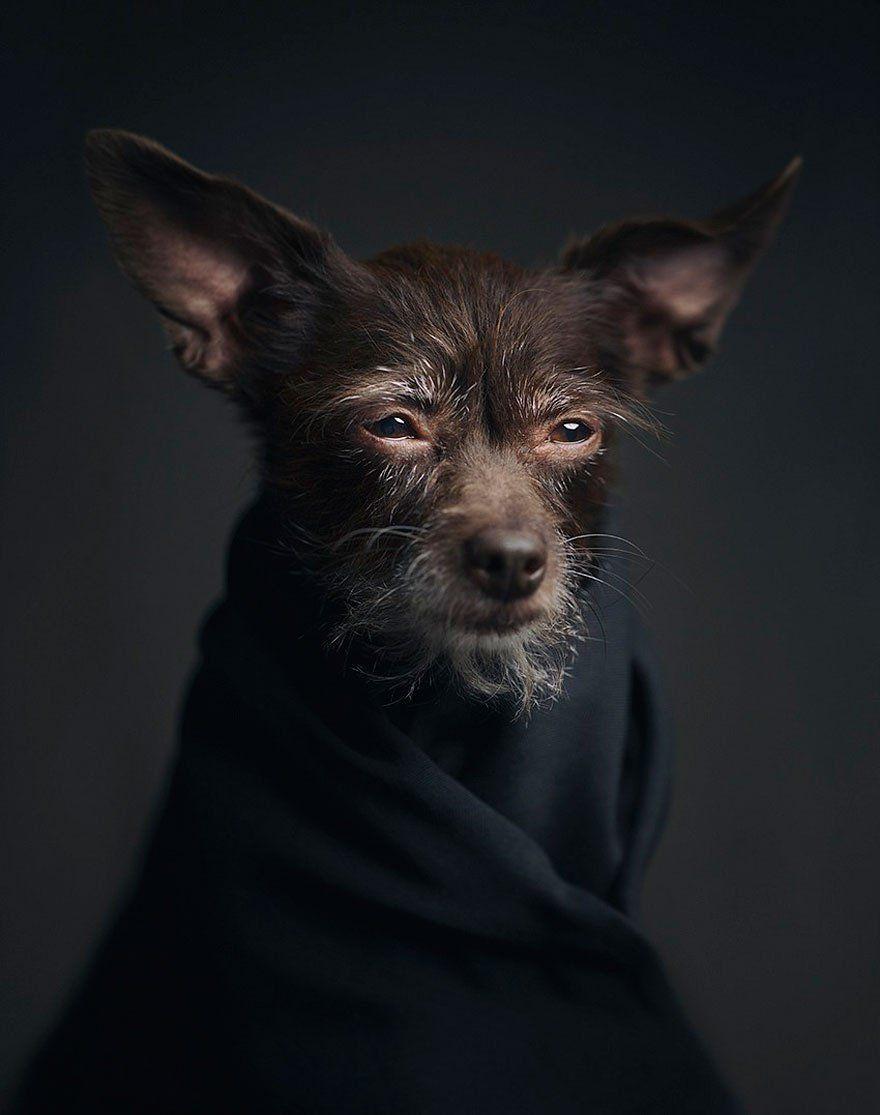 D'incroyables portraits d'animaux aux émotions et expressions humaines