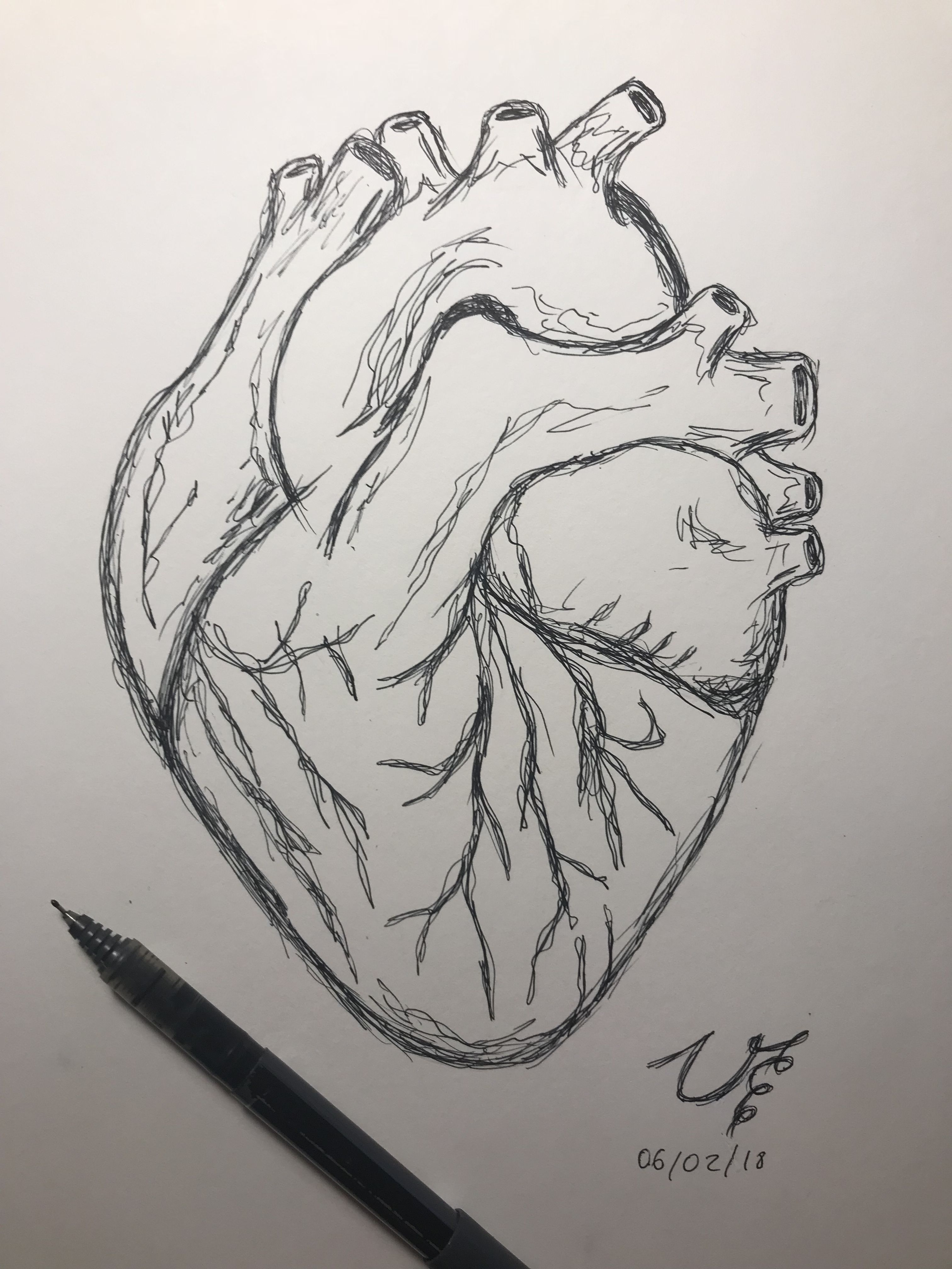Pencil Sketch Of Human Heart