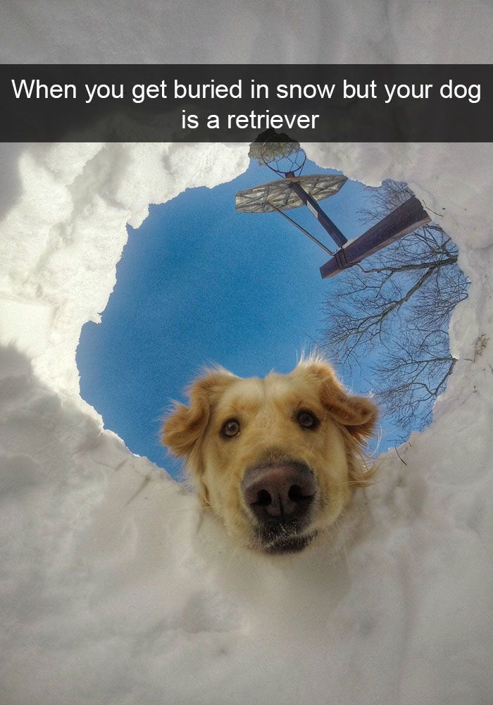 Dog Snaps Dog Snapchats Cute Animals Funny Animal Pictures