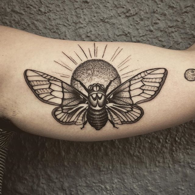 cicada for anne cicada cicadatattoo tattoo tattoos blackworkerssubmission. Black Bedroom Furniture Sets. Home Design Ideas