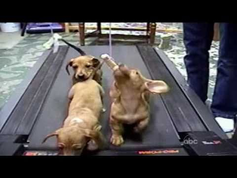 Cute Dogs Americas Funniest Home Videos Afv The First One S