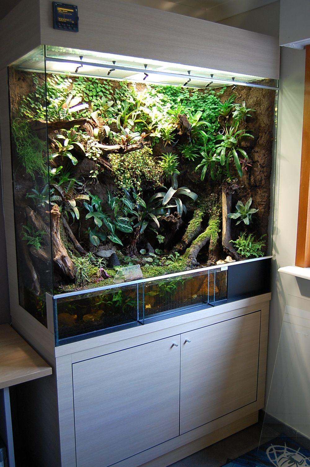 noch ein tolles beispiel f r ein regenwald terrarium inspiration regenwaldterrarien. Black Bedroom Furniture Sets. Home Design Ideas