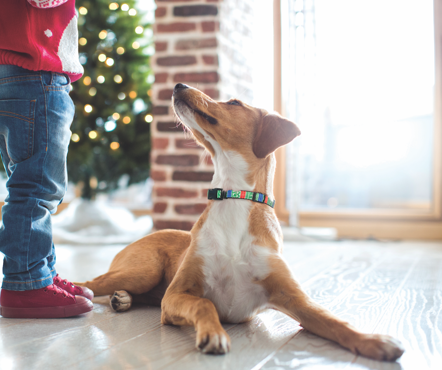 Get Your Four Legged Friends A Christmas Look With Our Celebrations Line From Coastal Pet Find All Four Fun Patterns At Coastal Four Legged Cool Patterns Pets