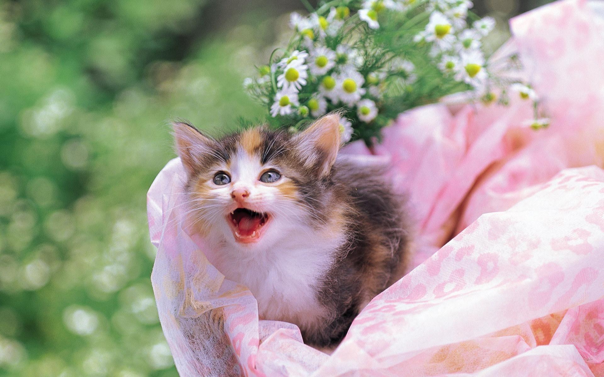 Добрым, кошки фото открытки