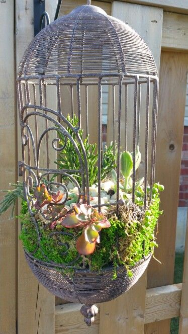Mini succulent garden in decorative birdcage in my for Plante verte decorative