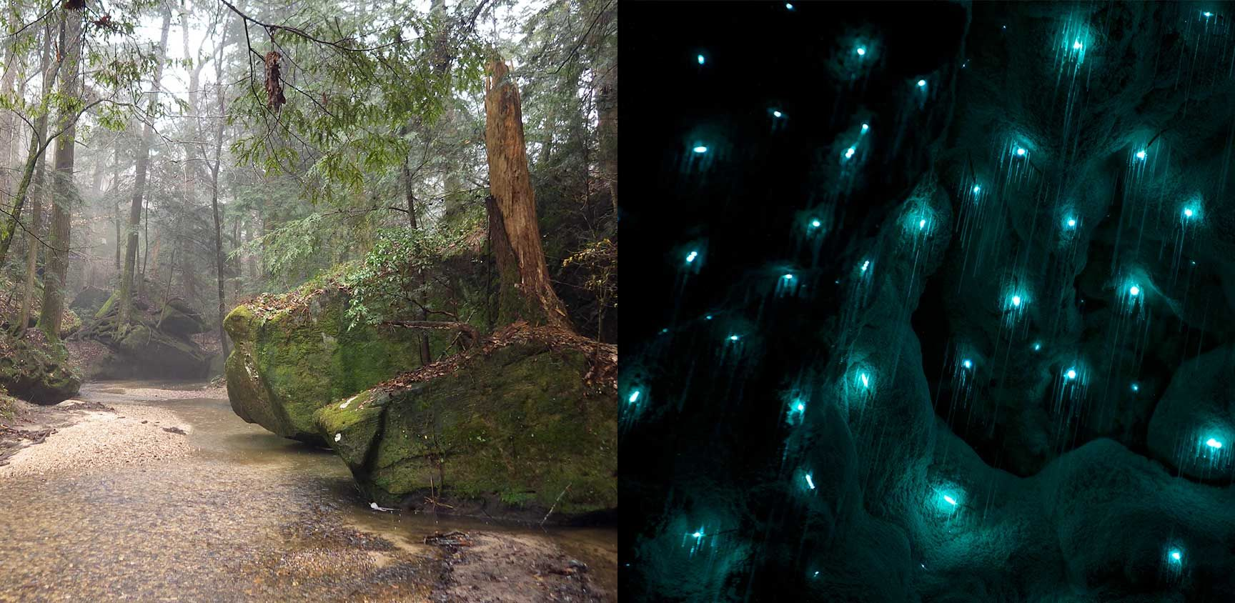 Dismals Canyon An Oasis Of Glowing Insects Glamping Cabins Fun Dismals Canyon Alabama Romantic Camping Travel Fun