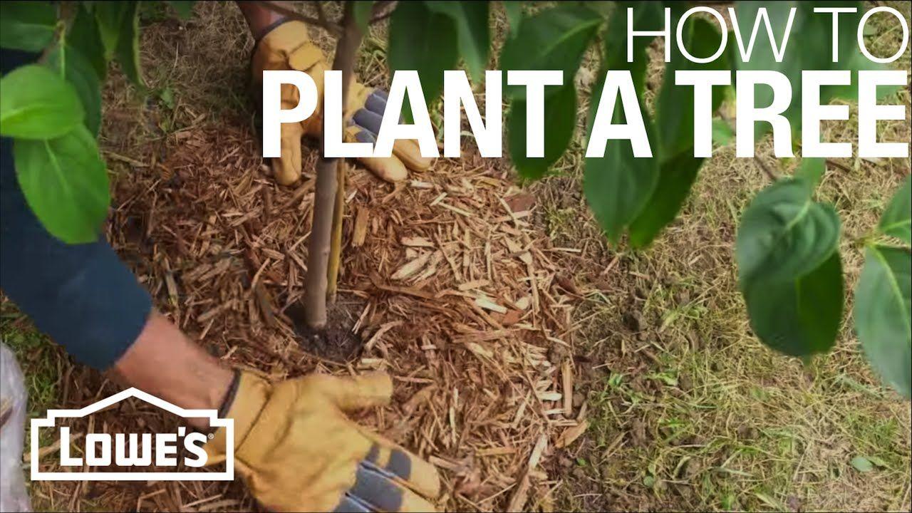 How to Plant a Tree imagens) Jardim
