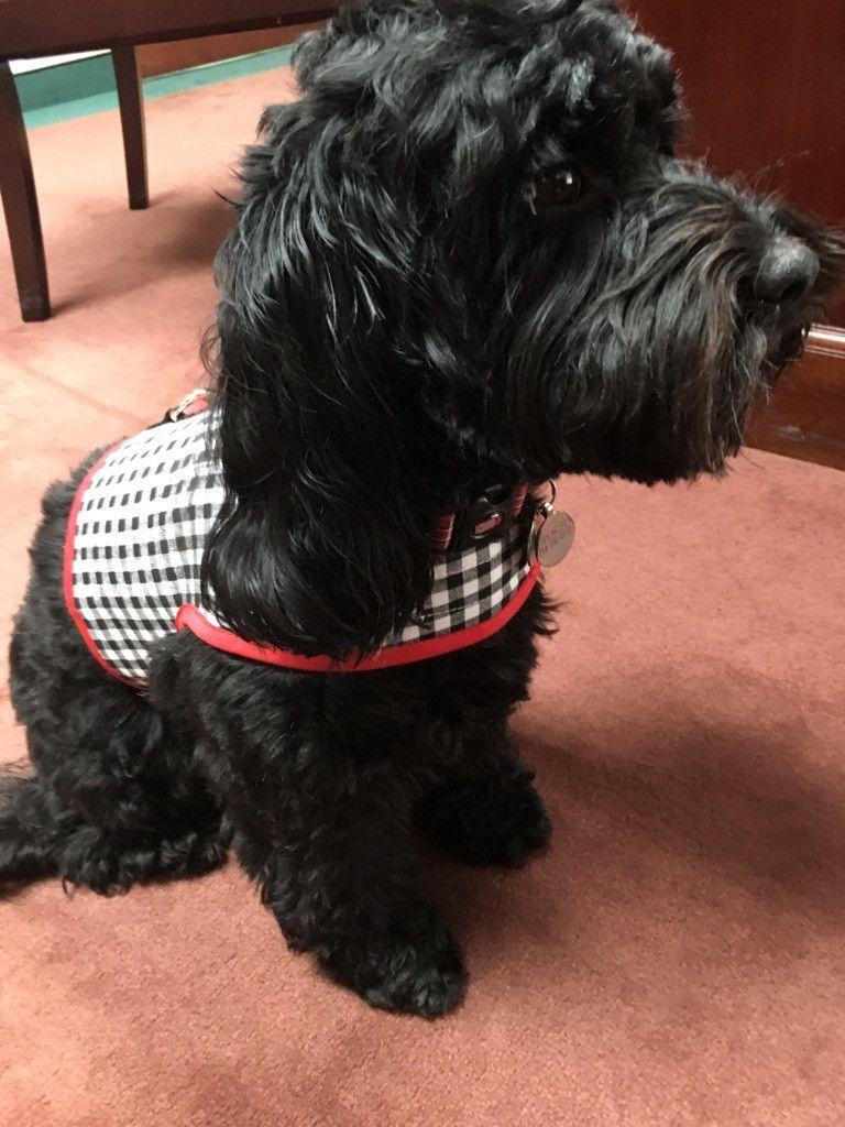 Black And White Check Dog Vest Harness Dog Vest Harness