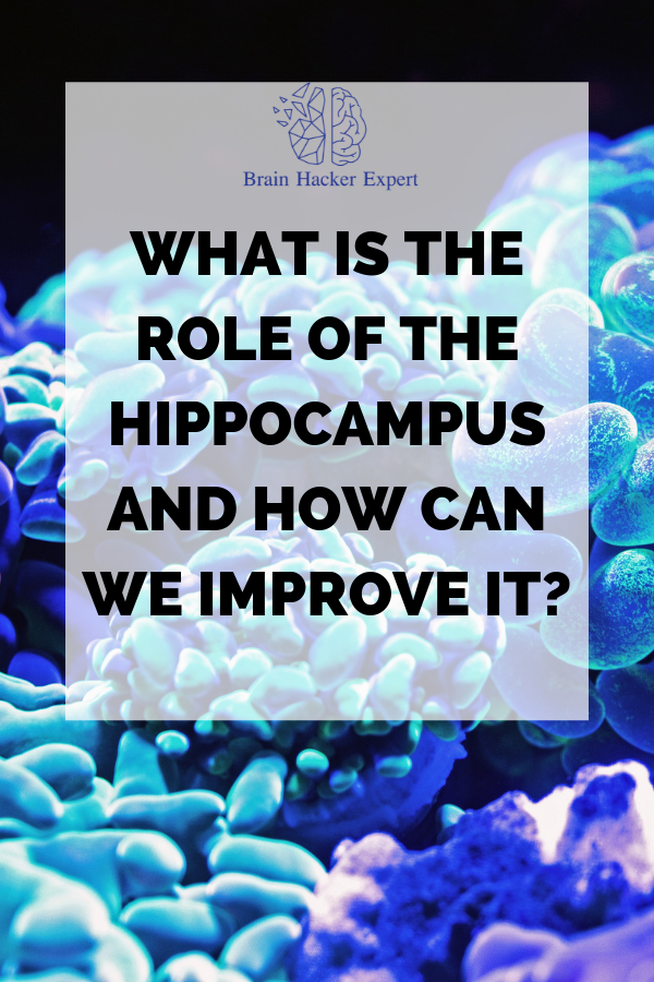 What is the role of the Hippocampus and how can we improve it?