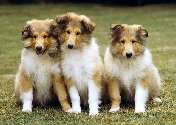 You Wouldn T Guess Dogs Like Italian Greyhounds Rhodesian