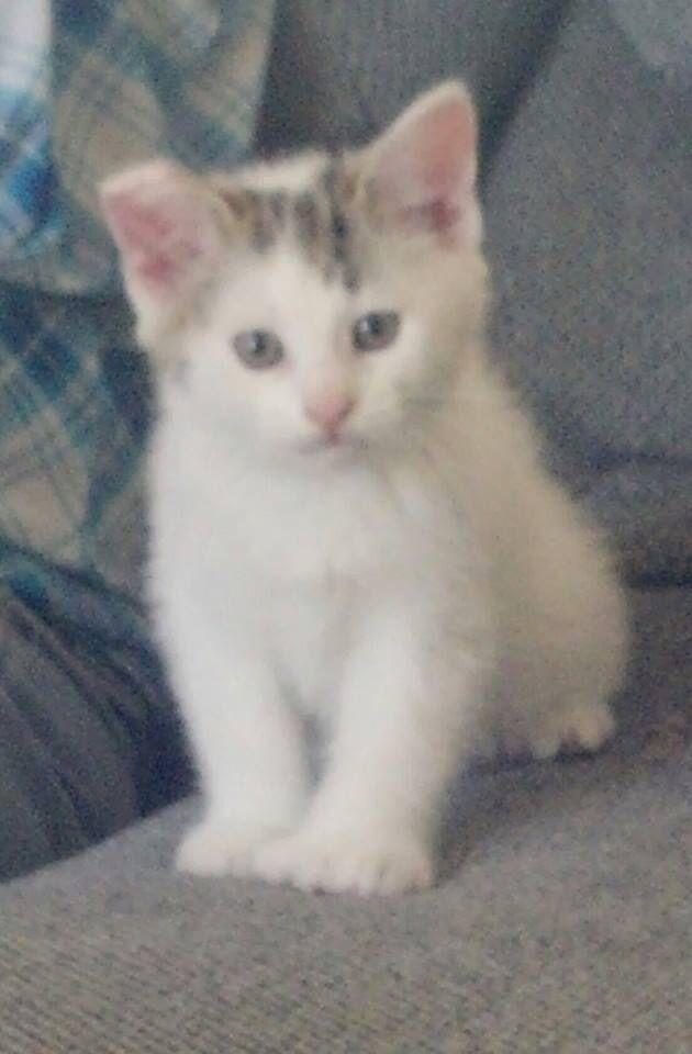 Atlas , mon chaton à son arrivée à la maison