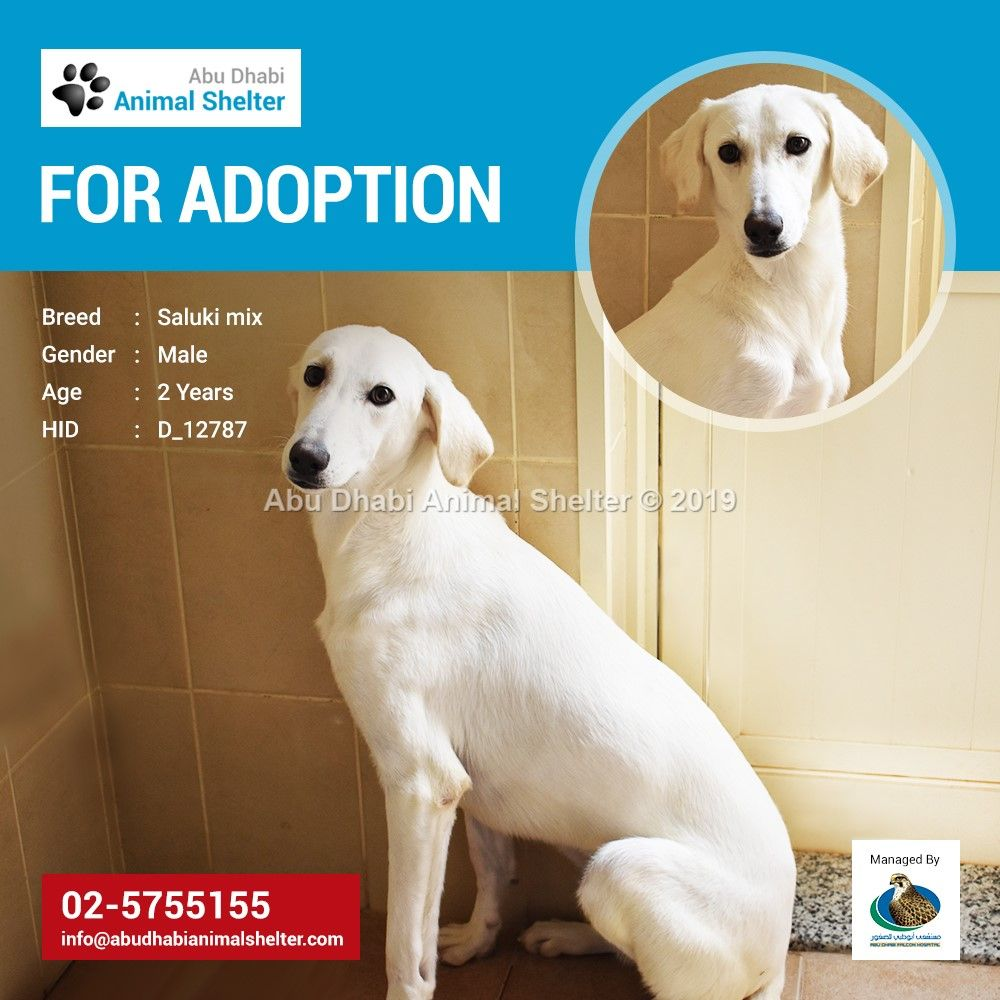 This Lovely Dog Is Waiting For His New Owner To Take Him To A Loving And Forever Home Adopt Him Today And Exper Animal Shelter Animal Shelter Adoption Animals