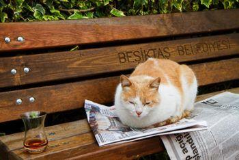 Ev Kedisi Sokakta Yaşayabilir Mi? Kedimi Sokağa Bıraktım | suzionline