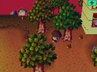 Acorn Festival Begins Jeff S Acww Blog Acorn Animal Crossing Festival