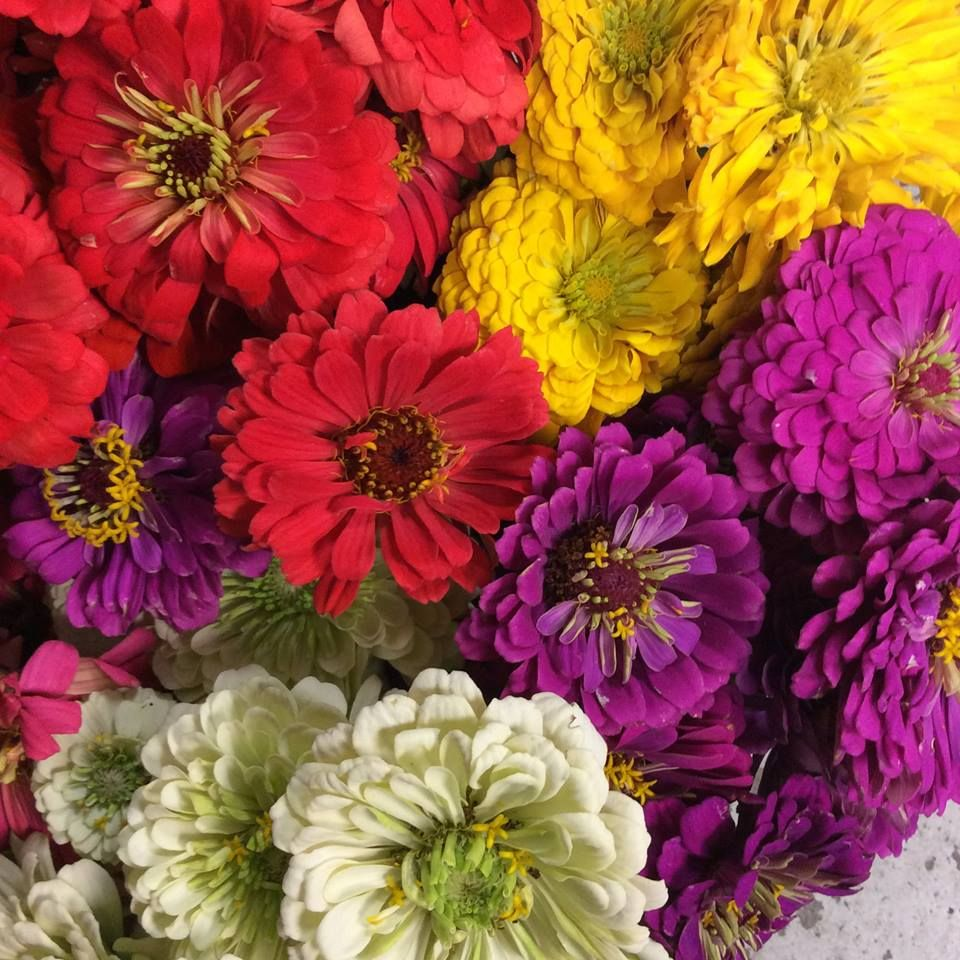 Why only have one color of flowers when you can have multiple? Allow ...