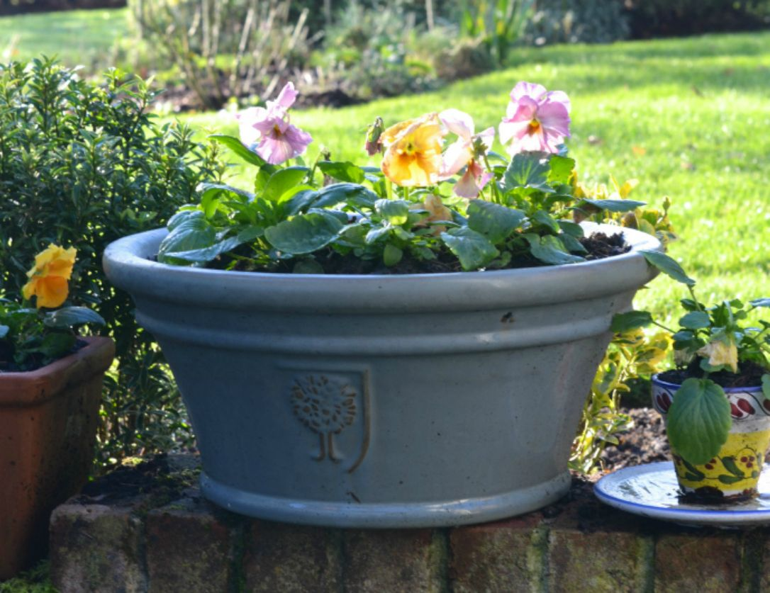 my top plants for your late winter garden winter colors plants