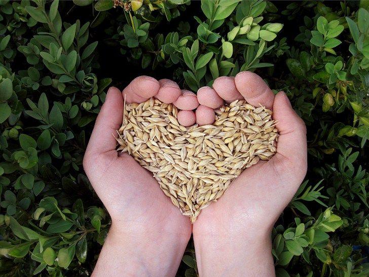 Getreide verarbeiten - Vom Korn zum Mehl zum Brot...