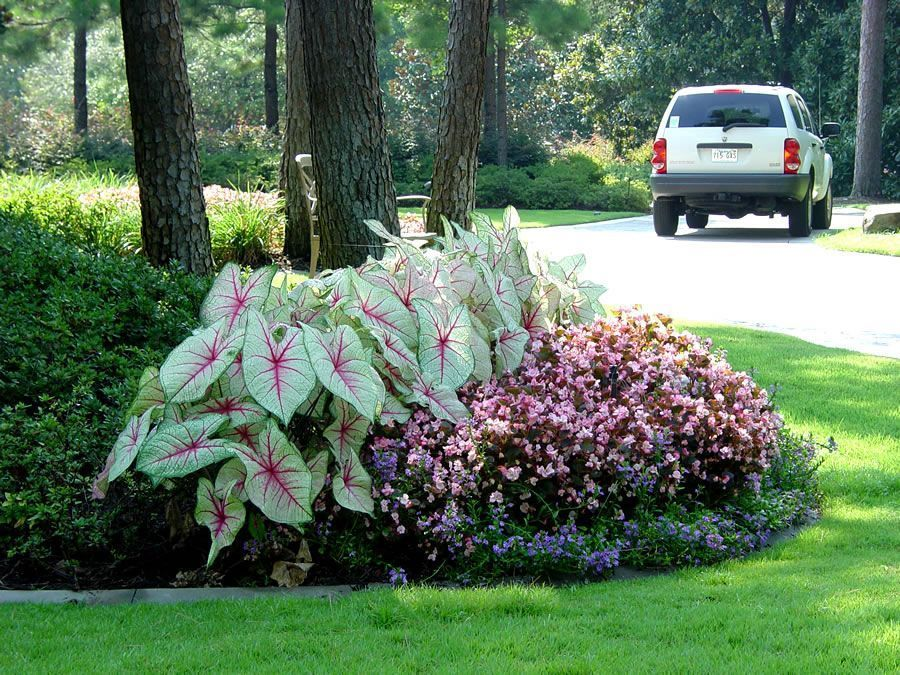 Landscape Caladiums Begonias Creative Flower Around Front Next Year Wrap Tree Bed And The Mymy Front Shade Plants Front Flower Beds Flower Beds