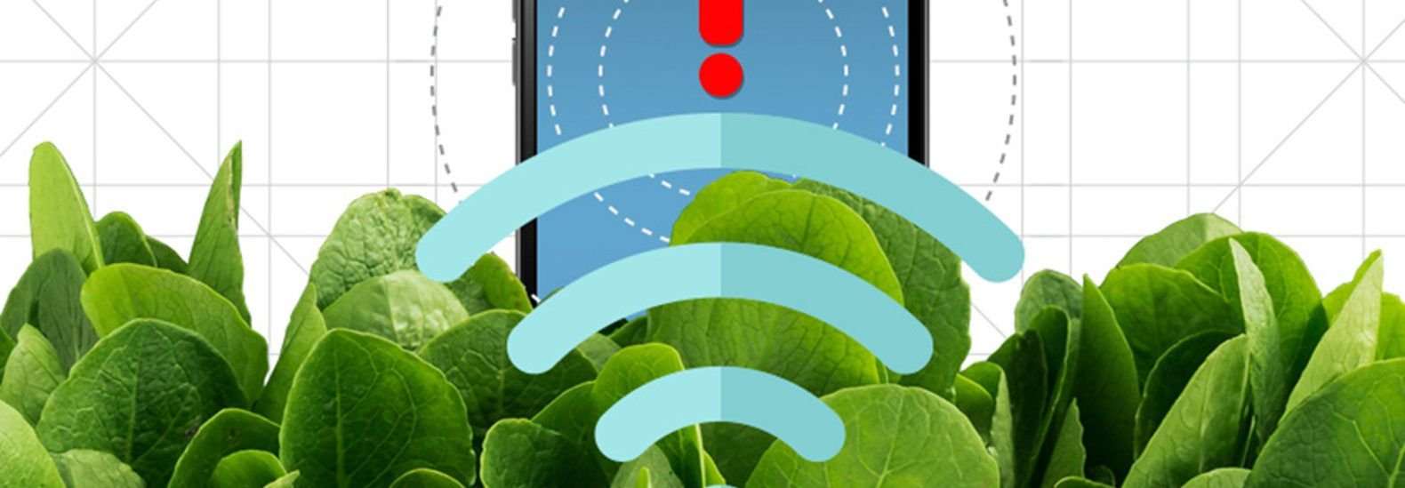 MIT fuses spinach leaves with nanobionics to create bomb-sniffing salad