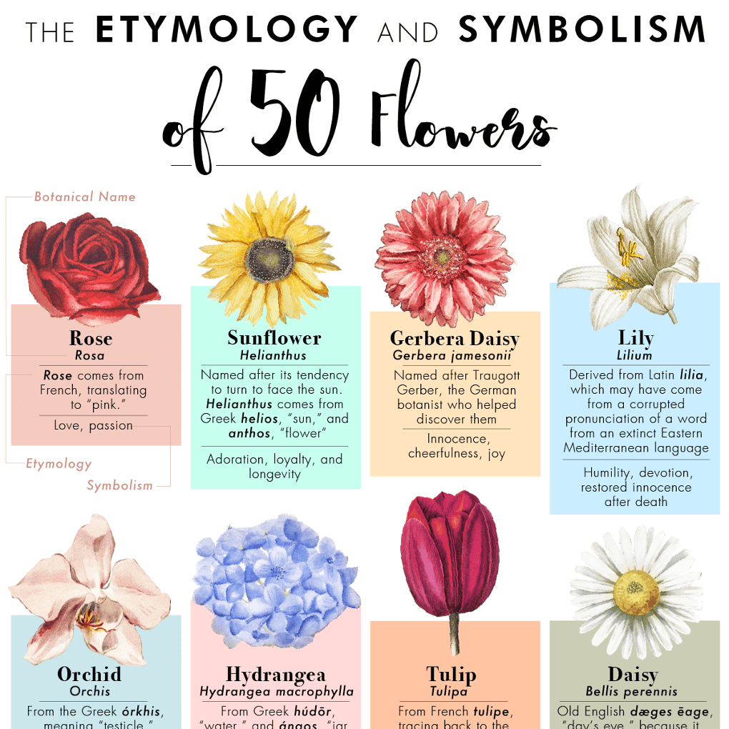 The Etymology And Symbolism Of 50 Flowers In One Poster Gardening Garden Diy Home Flowers Rose Flower Meanings Send Flowers Online Online Flower Delivery