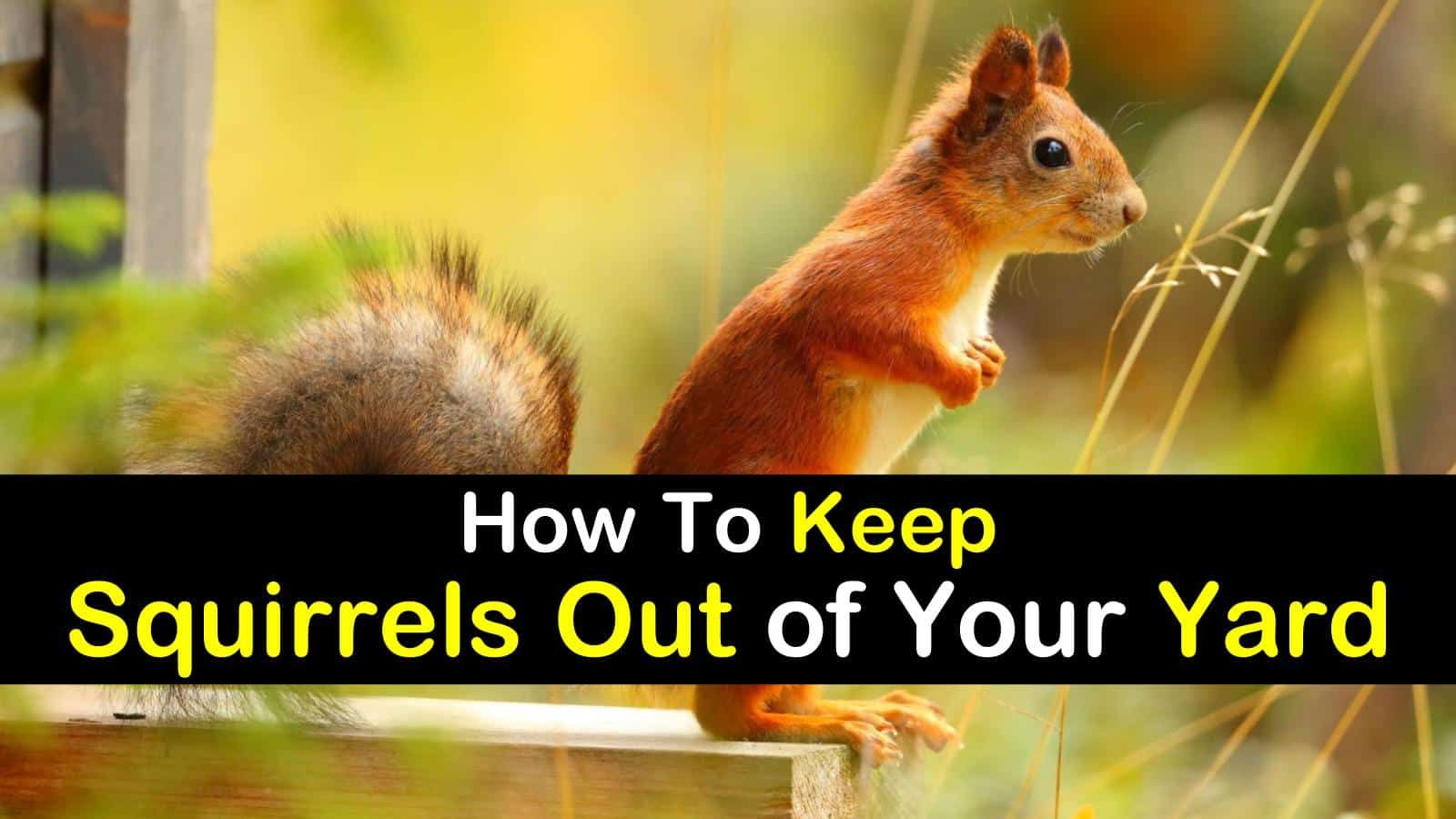 17+ Incredibly Easy Ways to Keep Squirrels Out of Your