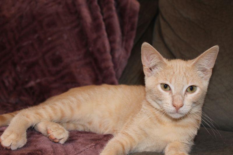 Pin On Pet Adoption In St Augustine Fl
