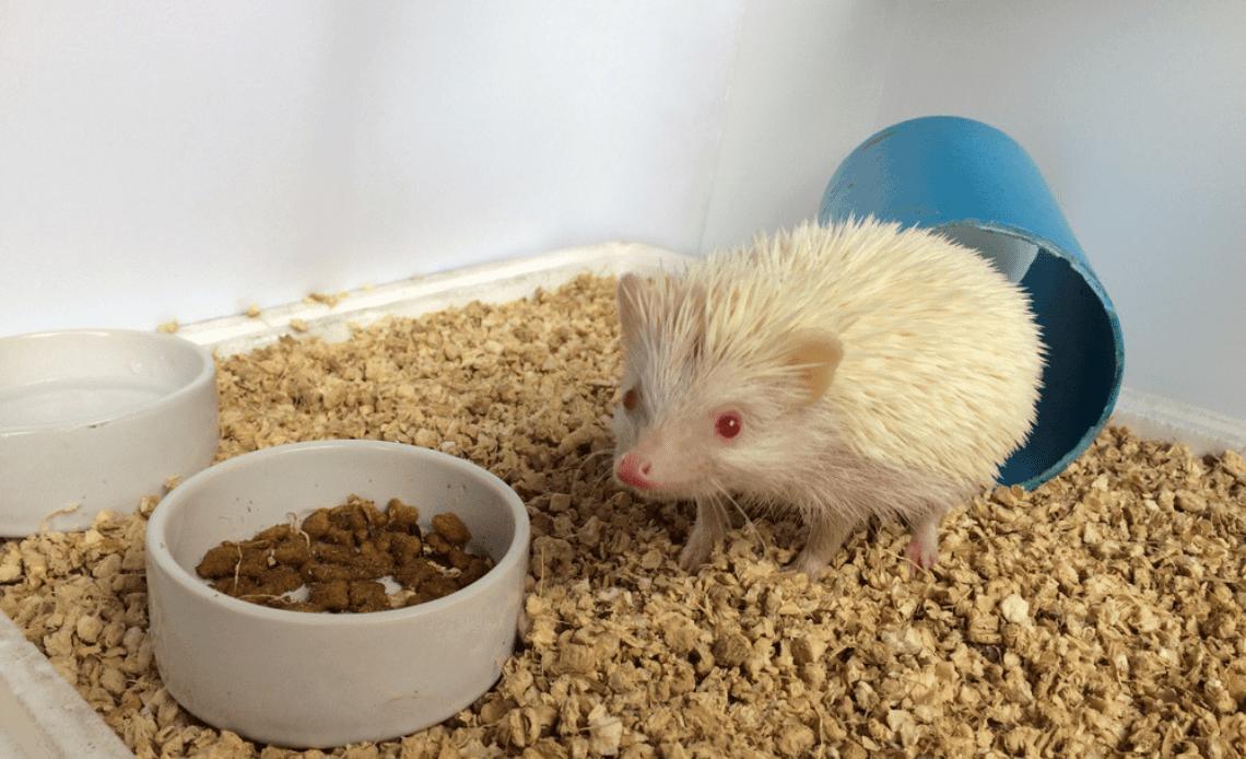 15 Best Cat Foods For Hedgehogs 2020 In 2020 Best Cat Food Cat Food Food Animals