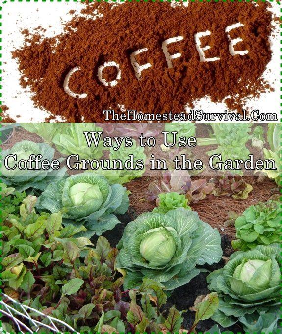 eb671ee82d25c4dd05d4819f97fd12e8 - Coffee Grounds Good For Vegetable Gardens