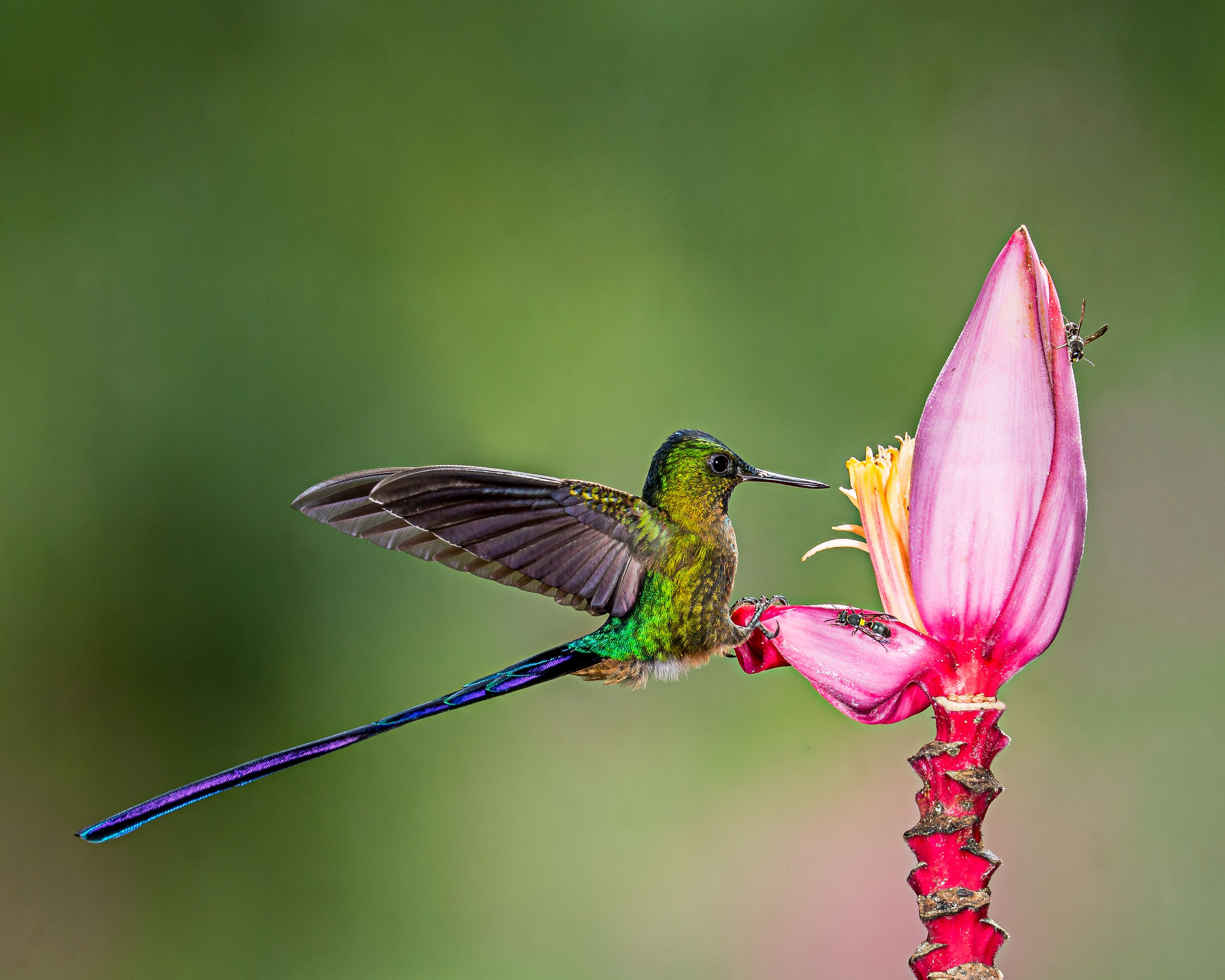 pin by Ольга Минаева on птички pinterest birds hummingbird and