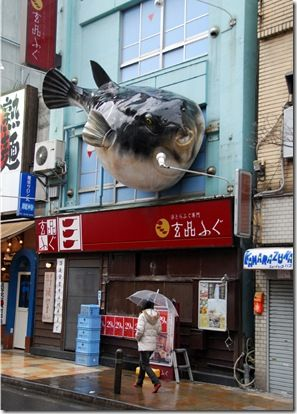 fugu gigante be careful with their consumption