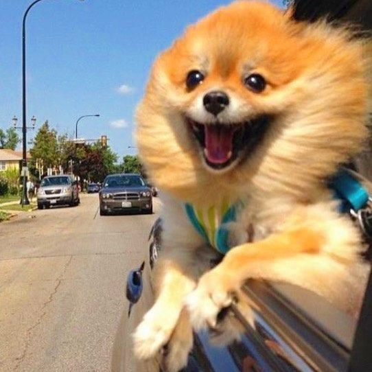 The Moment You Get The Best News Ever Watch This Space For An Event That Will Change Your Life Friday 10 Ma Funny Animal Pictures Funny Pictures Funny Animals