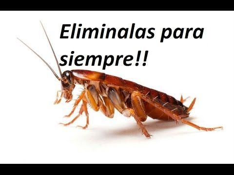 Como Acabar Con Las Hormigas Pin En Molestos
