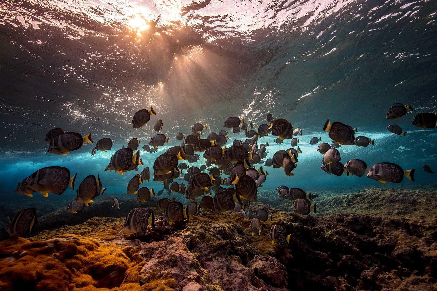Encyclopedia Entry About The Ocean S Habitat Zones And
