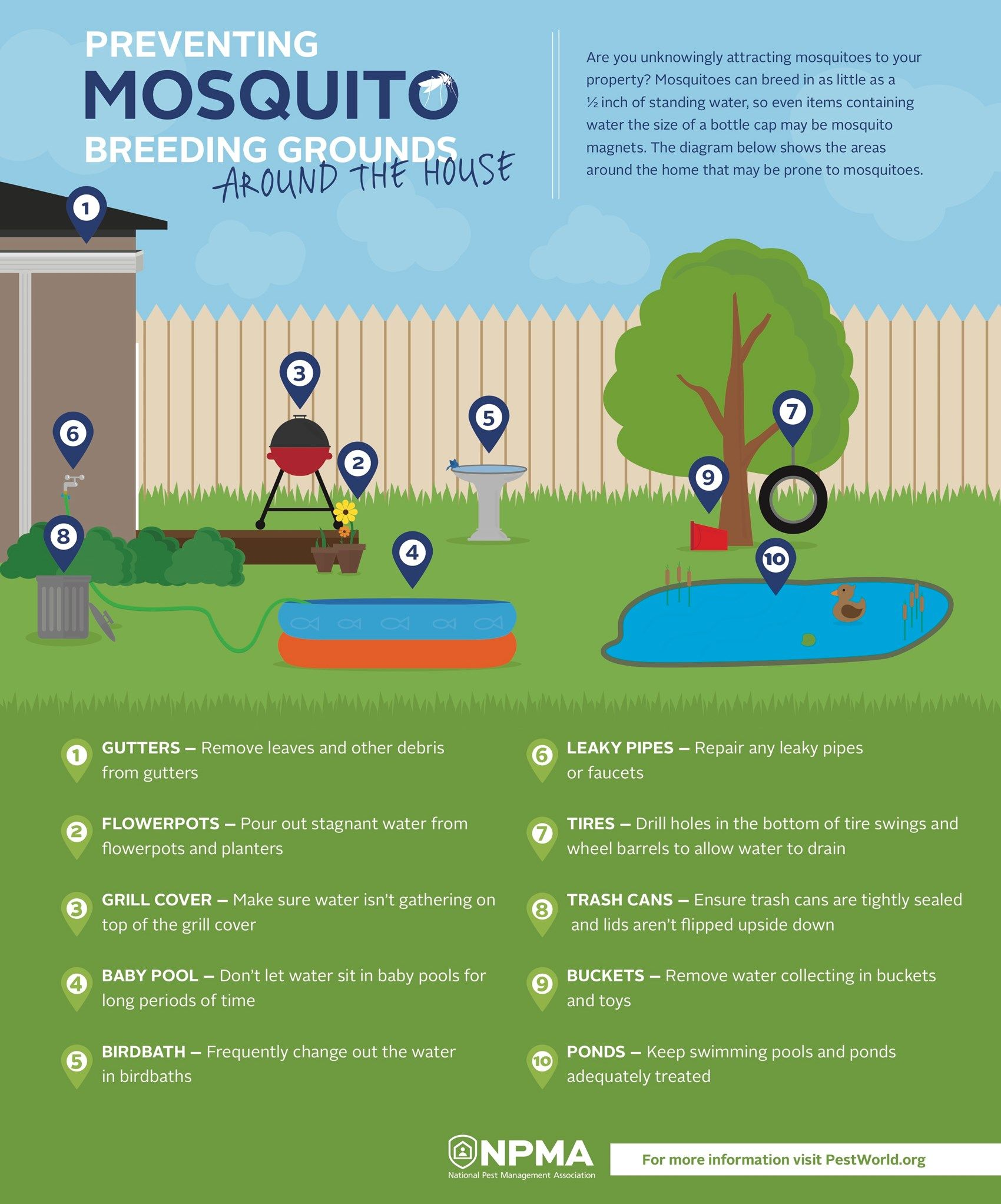 How to prevent mosquito breeding grounds around your house Ways to get rid of mosquitoes in your house