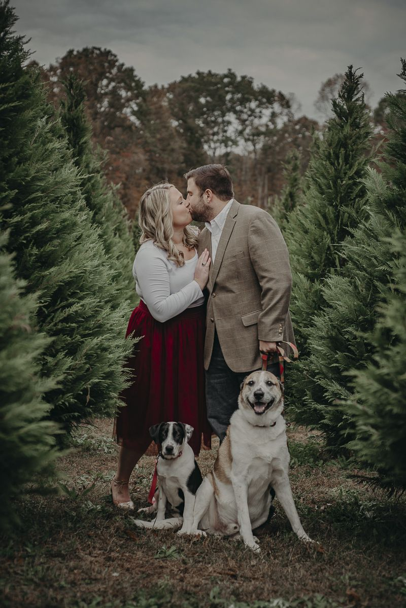 Happy Tails Cooper Sadie At A Christmas Tree Farm Daily Dog Tag Dog Christmas Card Family Christmas Pictures Christmas Tree Farm Photos