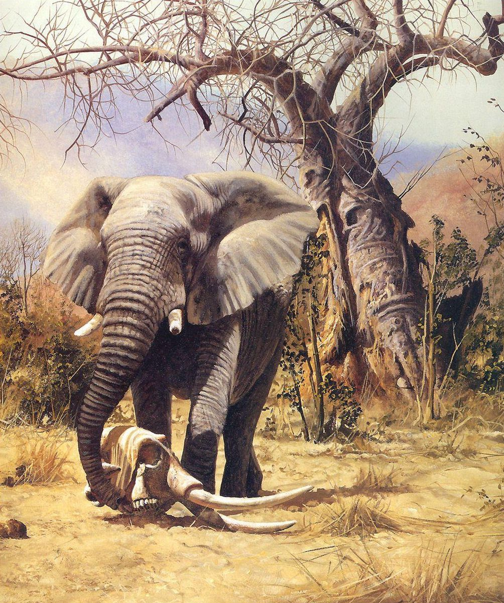 Elephant Craig Bone Animals Elephants