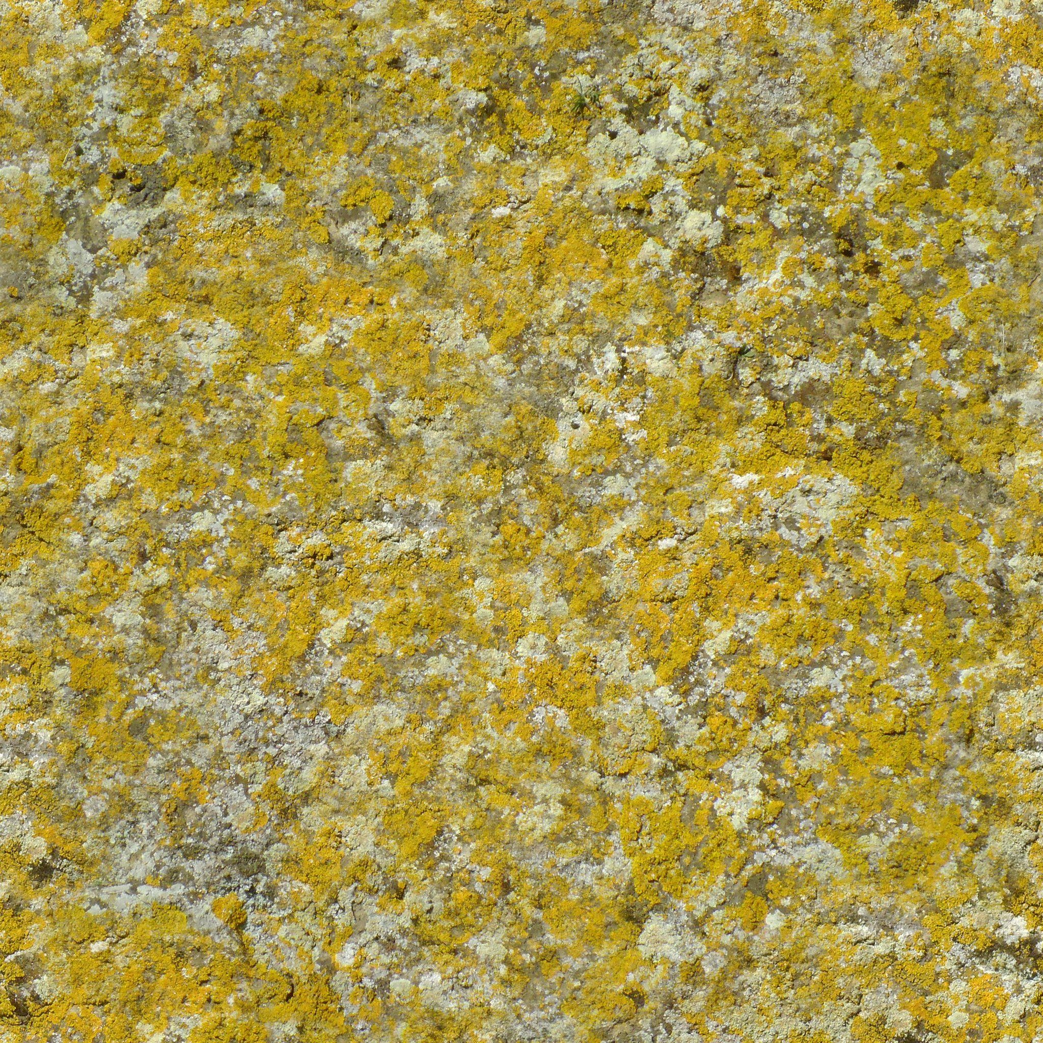 Zero Cc Tileable Moss Or Lichen Covered Stone Texture Edited From Pixabay Cc0 Stone Texture Seamless Textures How To Dry Basil