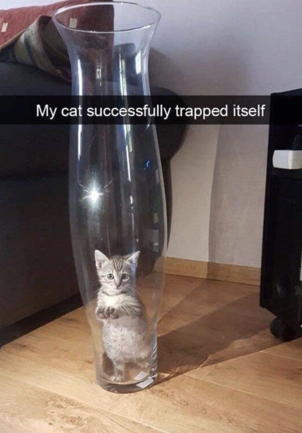 19 Pictures That Prove Cats Are Cute But Not To Be Trusted