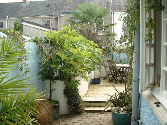 Wales || Tropical trees in tight urban garden in Wales, UK ...