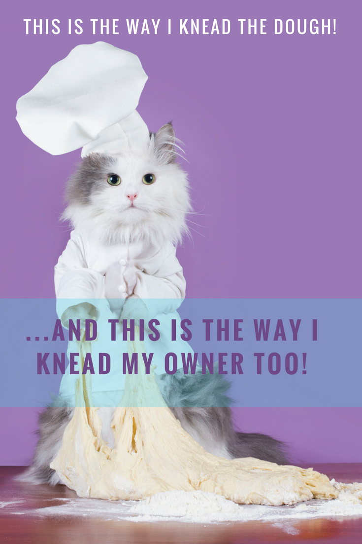 Why does my cat knead me and not my husband? Maybe the cat
