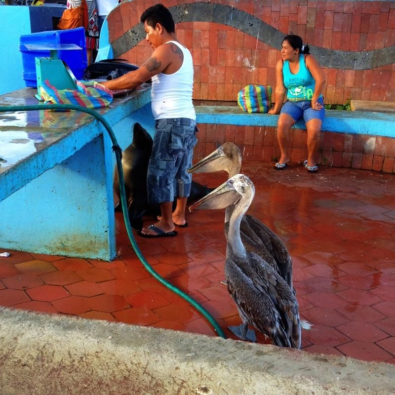 we're hungry! pelicans at the fish fillet | Around the World with an iPhone and Camera+