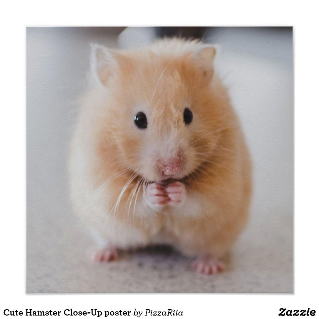 Cute Hamster Close Up Poster Zazzle Com En 2020 Animales