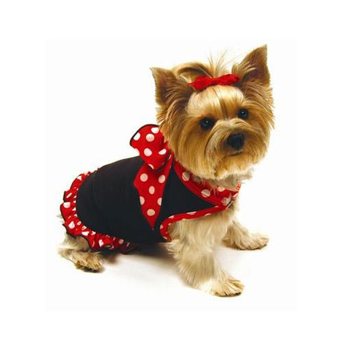 I Know I M Cute Dog Clothes Patterns Cute Teacup Puppies