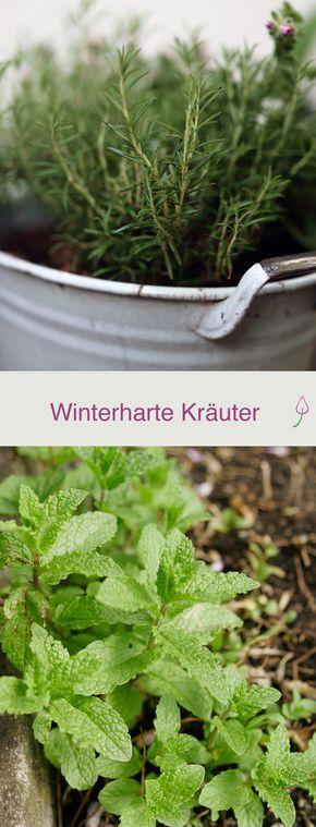 Winterharte Kräuter #kräutergartenbalkon