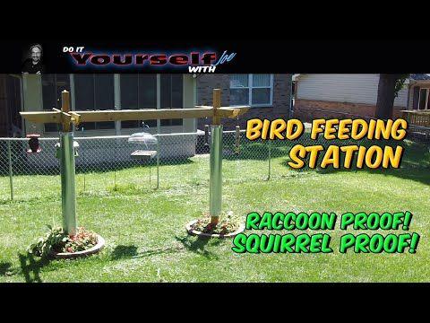 Stuck at Home DIY Bird Feeders Building a bird feeding station Squirrel and Raccoon Proof