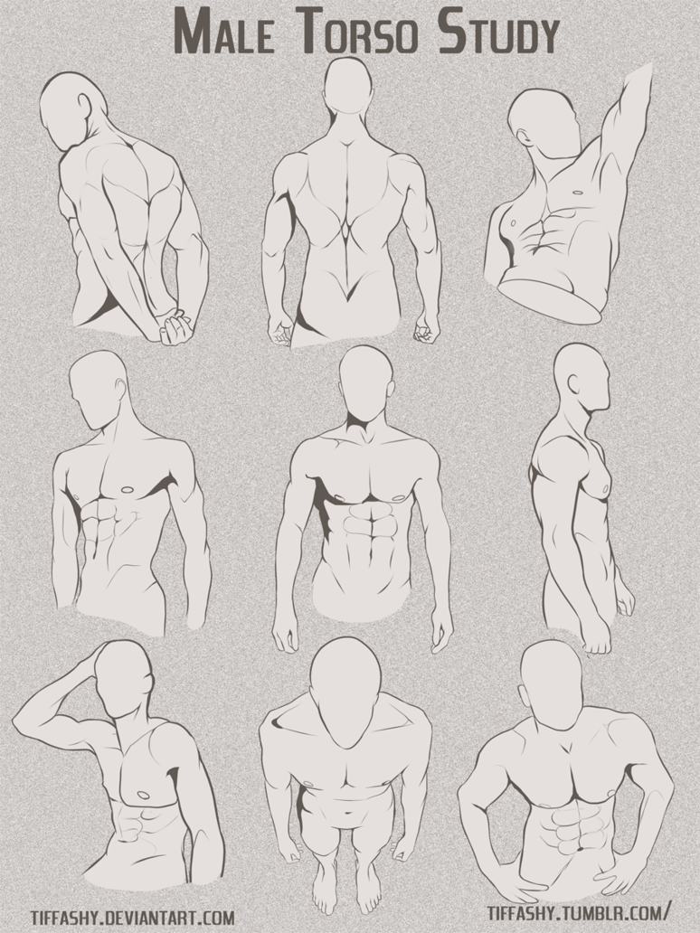 Male Torso/Chest Study by TIFFASHY | Art 4 | Pinterest | Male torso ...